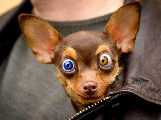 Cute & Funny Dog photos of the day